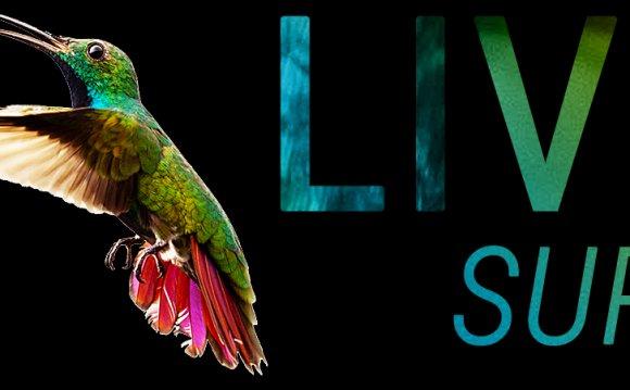 LiveSurf — идеальная система